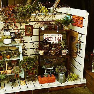 玄関/入り口/玄関左側/DIY/手作り/植物...などのインテリア実例 - 2014-11-03 20:22:58