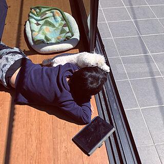 女性39歳の家族暮らし4LDK、トイプードルに関するKOHAKUさんの実例写真