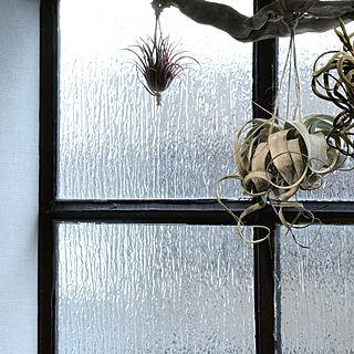 ガラスフィルム/ウィンドウフィルム/アンティークガラス/貼ってはがせる/賃貸...などのインテリア実例 - 2018-04-05 17:49:45