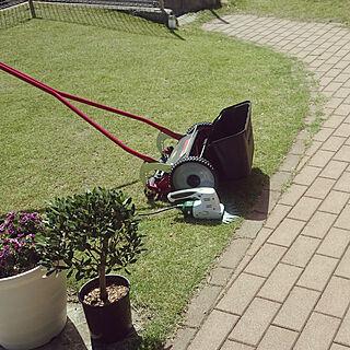 女性45歳の家族暮らし4LDK、芝生に関するnissyさんの実例写真