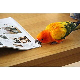 コガネメキシコインコの人気の写真(RoomNo.790940)