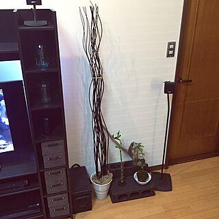 玄関/入り口/流木/観葉植物/ナチュラル/IKEA...などのインテリア実例 - 2016-04-21 21:27:28