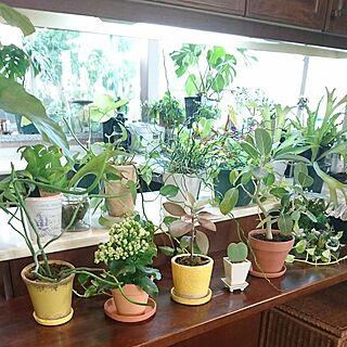 観葉植物のある部屋の人気の写真(RoomNo.2321760)