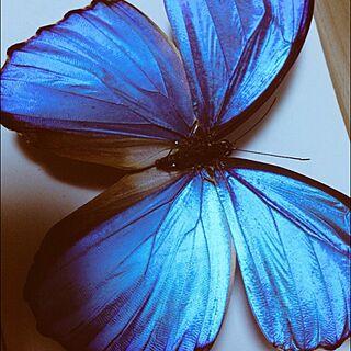 、昆虫に関するpusyukeさんの実例写真