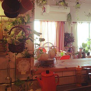 キッチン/スカイプランター/いなざうるす屋さん/植物のある部屋/緑化計画...などのインテリア実例 - 2014-04-01 08:10:34