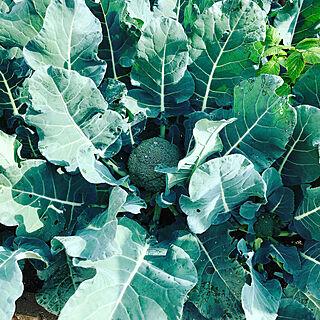 女性家族暮らし3LDK、家庭菜園に関するyumigotenさんの実例写真