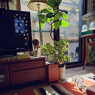 リビング/建て売り一戸建て/セルフリフォーム/グリーンのある暮らし/観葉植物のある暮らし...などのインテリア実例 - 2018-10-07 11:08:08