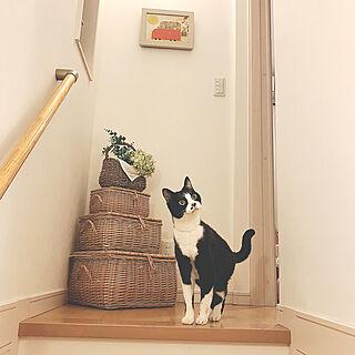 玄関/入り口/かごディスプレイ/かご大好き/ねこ/ねこのいる日常...などのインテリア実例 - 2018-01-04 13:12:30
