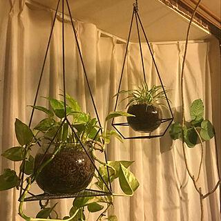 女性33歳の一人暮らし1DK、観葉植物に関するkayo103さんの実例写真