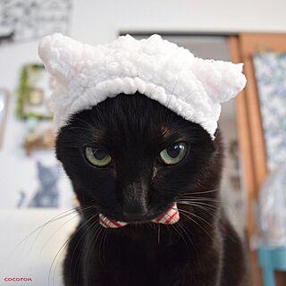 リビング/一眼レフ/黒猫/ねこのいる風景/ねこ部...などのインテリア実例 - 2016-12-14 22:43:58