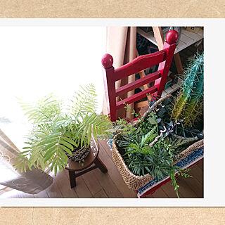 リビング/Botanical life /賃貸でも楽しく♪/mix style/いいね、フォロー本当に感謝です♡...などのインテリア実例 - 2021-06-14 16:34:19