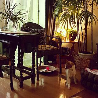 壁/天井/2018.6.18.☁︎☂️/棕櫚竹/ゲートレッグテーブル/イギリス家具...などのインテリア実例 - 2018-06-18 19:00:11