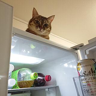 キッチン/ねこのいる風景/猫/ねこのいる暮らし/ねこと暮らす...などのインテリア実例 - 2020-03-07 21:13:03