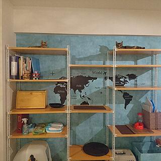 棚/壁紙DIY/にゃんこ/ねこのいる日常/こねこ...などのインテリア実例 - 2017-08-27 22:59:28