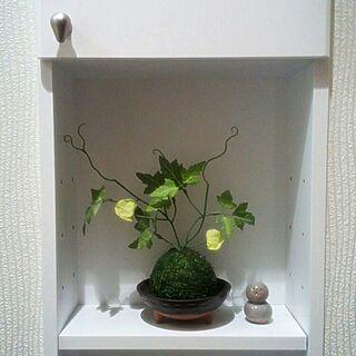 女性44歳の家族暮らし、苔玉フェイクに関するakikoさんの実例写真