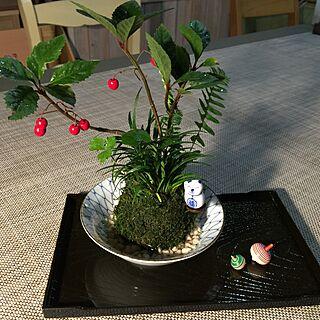 女性家族暮らし、龍のヒゲに関するsatochanさんの実例写真
