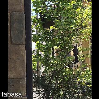 玄関/入り口/巣箱/野鳥の来る家/シンボルツリー/建売...などのインテリア実例 - 2018-04-21 11:54:30