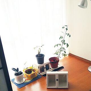 リビング/DIY/DIY女子/ゴムの木/グリーン...などのインテリア実例 - 2016-06-05 19:10:00