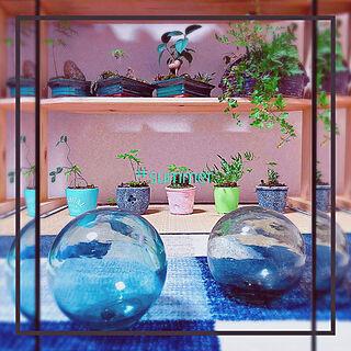 8月10日/ガジュマル♥︎/ミニ盆栽♥手作り/棚DIY/ブルー...などのインテリア実例 - 2019-08-10 08:59:46