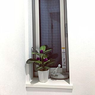 初投稿/観葉植物/バス/トイレのインテリア実例 - 2020-03-07 21:16:43