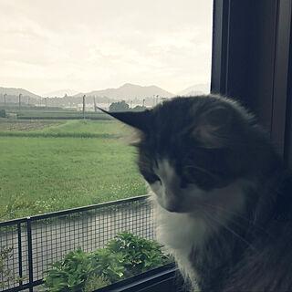 アジサイ/キャットタワー/額縁のような緑の風景/ねこと暮らす/猫のいる暮らし...などのインテリア実例 - 2021-09-11 16:52:33