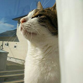 窓辺が好きの人気の写真(RoomNo.2721352)