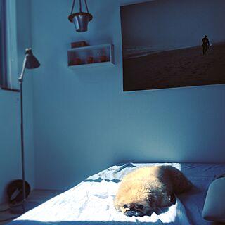 男性の、Other、一人暮らしの「ベッド周り」についてのインテリア実例