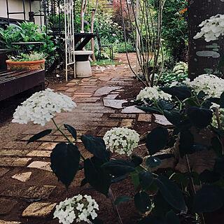 出逢えた事に感謝して/花のある生活/大好きな季節✨/レンガの小道DIY/庭...などのインテリア実例 - 2019-06-25 22:38:09