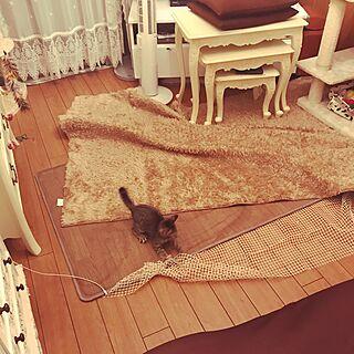 リビング/狭いけど楽しみたい!/狭い家/古い賃貸でも楽しく♫/狭い家で猫3匹と暮らす...などのインテリア実例 - 2017-06-24 20:49:27