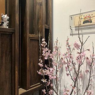 hana- ちゃんのラベル/招き猫/桜/花が好き/古いものが好き...などのインテリア実例 - 2021-02-28 08:37:21