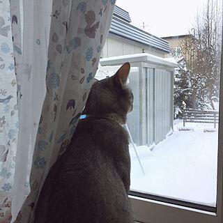 女性家族暮らし4LDK、暖房周りに関するkotoriさんの実例写真
