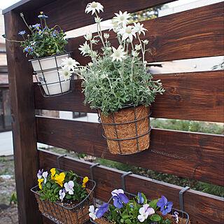 玄関/入り口/3コインズ/ナチュラル/観葉植物のインテリア実例 - 2018-04-25 07:46:18