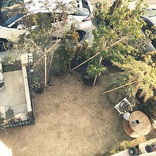 アカシアプルプレア/シマトネリコ/モノ集め/植木のインテリア実例 - 2018-01-16 15:08:19
