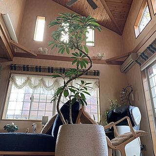 ツピタンサス/吹き抜けのある家/植物と暮らす/お休みの日/癒し...などのインテリア実例 - 2020-02-23 09:02:16