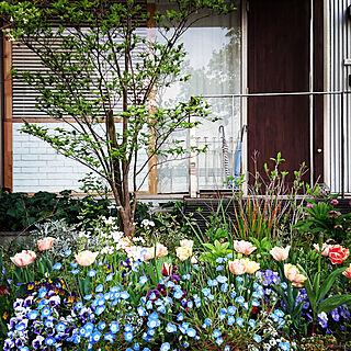 部屋全体/フロントガーデン/ガーデン/庭のある暮らし/花のある暮らし...などのインテリア実例 - 2019-04-17 16:55:00