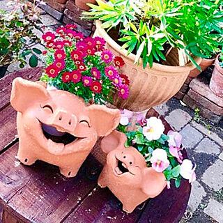 玄関/入り口/ガーデニング/ぶたちゃん/ケーブルドラム/植木鉢のインテリア実例 - 2018-05-18 20:39:14