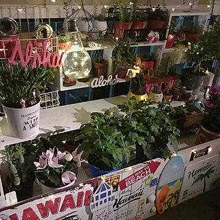 部屋全体/多肉植物/サボテン/ナチュラル/花のある生活...などのインテリア実例 - 2017-09-08 23:11:47