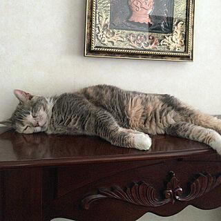 リビング/マントルピース/クラシック/英国アンティーク/猫と暮らす...などのインテリア実例 - 2017-10-30 23:52:04