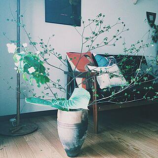 リビング/初夏の花/新緑の季節/グリーンのある暮らし/一人暮らし...などのインテリア実例 - 2015-05-06 10:01:09
