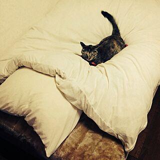 ベッド周り/ニトリのベットカバー/ペット/ネコ/猫のインテリア実例 - 2013-11-04 16:25:42