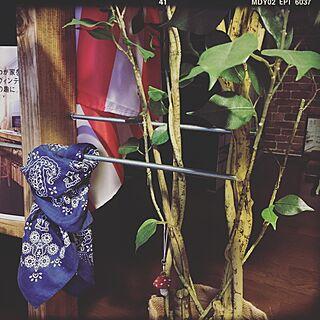 壁/天井/ニトリのフェイクグリーン/レンガ柄壁紙/壁紙屋本舗/バンダナ...などのインテリア実例 - 2016-06-10 23:33:26