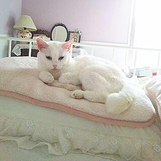 白猫の人気の写真(RoomNo.1949863)