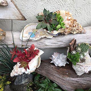 玄関/入り口/流木/海で拾った貝殻/植物/シーグラス拾い...などのインテリア実例 - 2016-06-07 12:25:02
