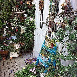 棚/オレガノ/リース/植物♡/植物のある暮らし...などのインテリア実例 - 2016-11-19 23:56:07