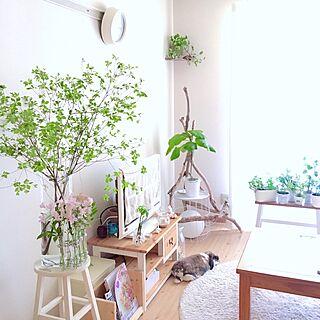 部屋全体/花のある暮らし/グリーンのある暮らし/植物/グリーン...などのインテリア実例 - 2017-05-02 11:43:49