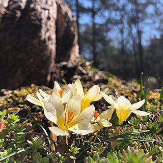 ガーデニング/花が好き/ひとり暮らし/日常/季節を楽しむ暮らし...などのインテリア実例 - 2021-03-03 21:24:26
