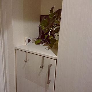 家族暮らし3LDK、観葉植物 IKEAに関するmiaoさんの実例写真