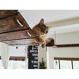 壁/天井/DIY/ねこ部/猫と暮らす/BLACK&DECKER...などのインテリア実例 - 2017-06-24 09:52:56