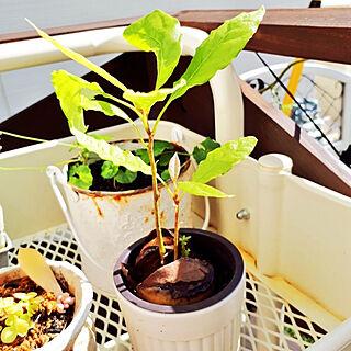 女性家族暮らし4LDK、植物成長記録に関するmakino1105さんの実例写真