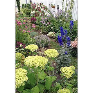 インテリアどころか外!/Gardeningやってます/Blogやってませんのインテリア実例 - 2015-07-17 09:57:17
